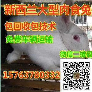 一只家兔现在什么价格