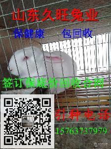 新西兰兔多少钱一斤 批发价格多少