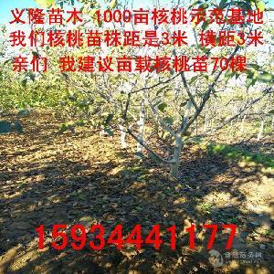 8公分核桃樹==10公分核桃樹=12公分核桃樹