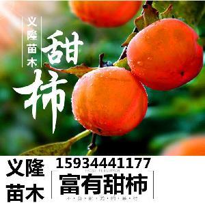 8公分=10公分=12公分柿子樹