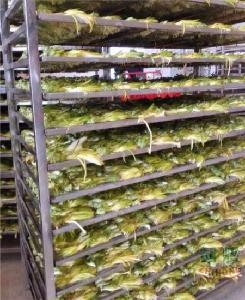 超绿色食品霸王花烘干机的选择你选对了吗