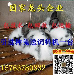 肉兔苗批发的价格