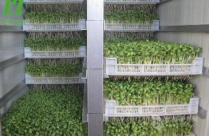 生产芽苗菜的机器|小型芽苗菜机|山东芽苗菜机