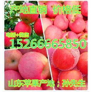 山東紅富士蘋果批發多少錢一斤 蘋果產地 紅富士蘋果