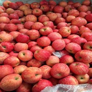 山东苹果批发 红富士苹果格