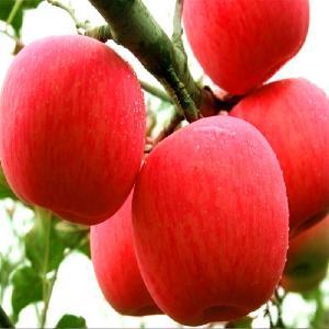 批发红富士苹果