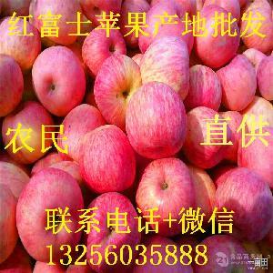 2019红富士苹果