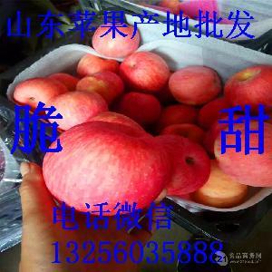 山东烟台栖霞苹果价格 一级水晶红富士苹果 苹果现在价格