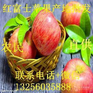 批发-水晶【山东苹果批发价格】_山东苹果批发价格品牌/图片/价格