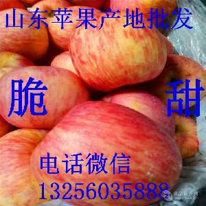 红富士苹果价格行情信息 新鲜苹果 山东苹果买卖基地