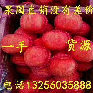 山东苹果产地 现红富士苹果产地批发价格