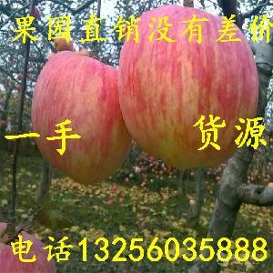 美八苹果种植基地报价多少 山东红富士苹果批发
