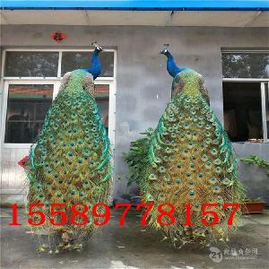 一架孔雀标本多少钱哪里有卖孔雀标本的