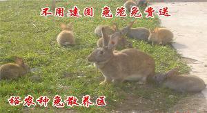 新西蘭肉兔吃的東西