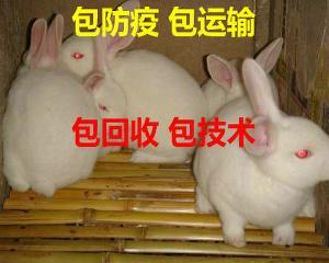 肉兔养殖加盟回收