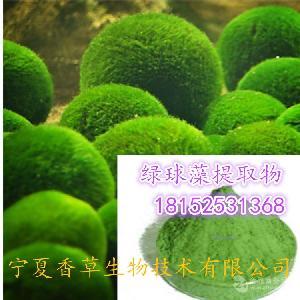 绿球藻提取物 多糖30% 幸福海藻球粉 moss球速溶粉 绿球藻浸膏粉