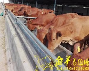现在牛犊价格