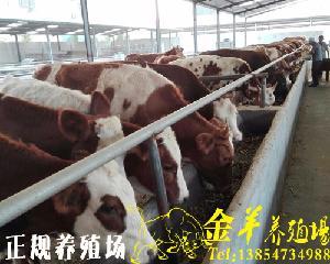 种牛多少钱一头