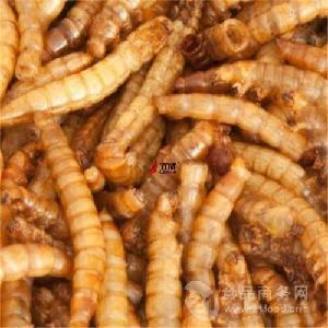 蠅蛆干燥機 微波干燥設備廠家