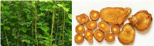 白藜芦醇99% 虎杖提取物 化妆品原料 天然白藜芦醇