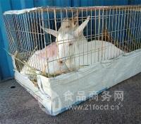 大型萨能奶山羊养殖基地在哪里头胎怀孕的奶山羊多少钱