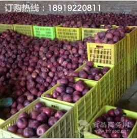 国产蛇果产地批发全红花牛苹果批发价格 冷库花牛苹果便宜了