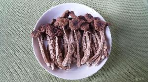 常年供應干茶樹菇(中號)