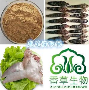 鹿尾提取物 鹿尾多肽粉 鹿尾粉价格 鹿尾冻干粉200目鹿尾活性肽