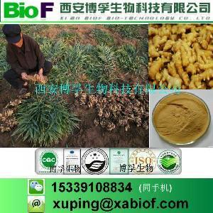 厂家供应 生姜提取物 5%-20%姜辣素 现货包邮