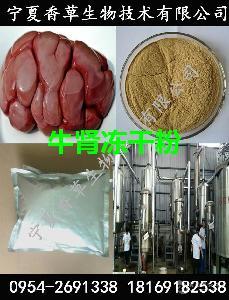 牛腎凍干粉供應  牛腎提取物廠家 牛腰子熟粉  水溶性牛腎粉
