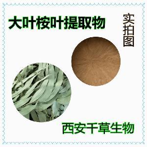 桉树叶提取物桉树叶流浸膏 厂家定制桉树叶浓缩粉烘焙干燥易溶