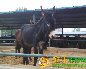 一头驴卖多少钱