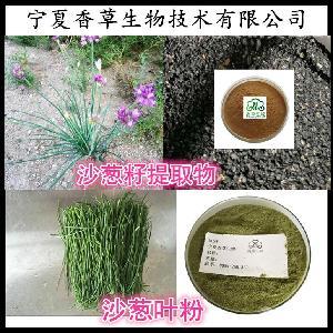 沙葱提取物厂家 沙葱粉供应六盘山野生沙葱叶粉 沙葱籽粉