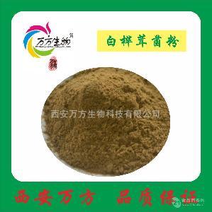 白樺茸菌粉99% 天然植物萃取 廠家生產直銷