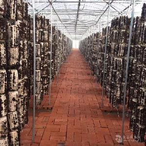 買木耳,找益菇園,優質農產品基地木耳生產全程可追溯