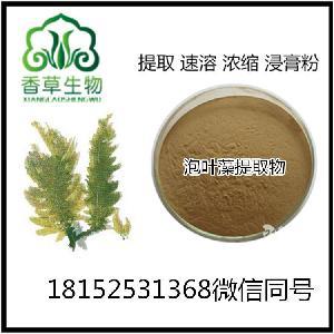 泡葉藻提取物30:1 純粉 泡葉藻浸膏粉 海藻多糖 海藻濃縮粉80目