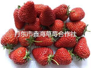 草莓基地,草莓批发,有机草莓,口感好