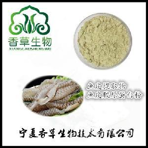 鱼皮提取物30:1  鱼皮胶原蛋白粉 供应鱼皮冻干粉 小分子肽