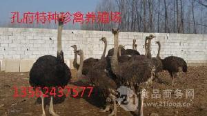 哪里有卖鸵鸟的提供鸵鸟养殖技术可以签订鸵鸟回收合同