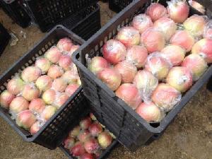 嘎啦苹果今年价格 山东省 嘎啦苹果产地价格