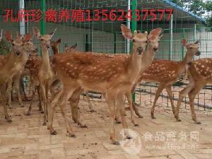养殖梅花鹿赚钱吗哪里有出售梅花鹿的养殖场可以考察