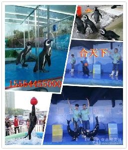 出租海狮表演,鸵鸟孔雀