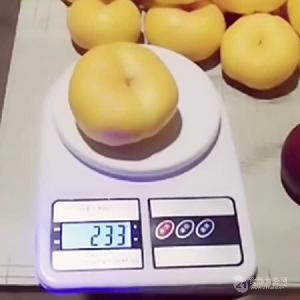 哪里批发桃树苗-中油8号桃树苗批发价格、哪里有实生桃树苗