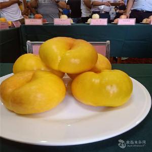 哪里卖桃树苗,中华寿桃树苗哪里卖=桃树苗好品种哪里卖