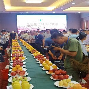哪里出售桃树苗-黑桃树苗多少钱一棵、新品种桃树苗哪里有