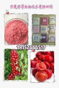 钙果粉批发 甘肃钙果基地 钙果粉厂家/价格 钙果汁粉供应