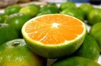 宜昌蜜桔產地批發橘子